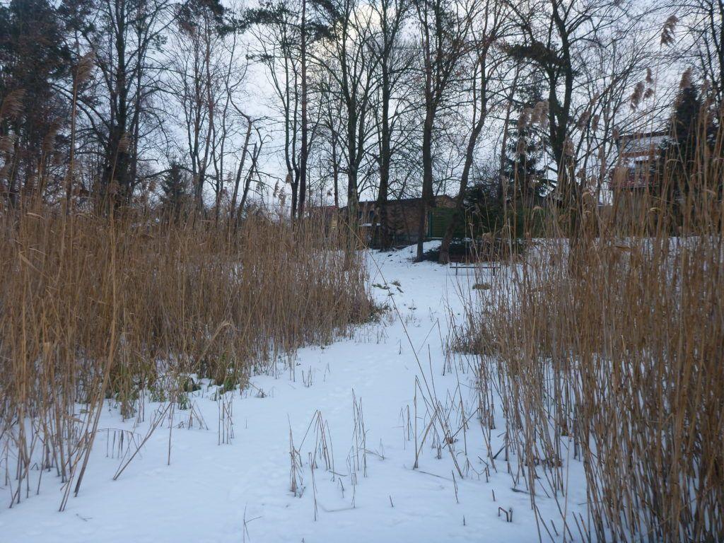 The clearing to Jezioro Kraksy (Kraksy Lake)