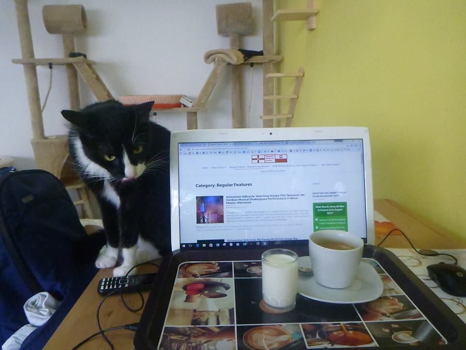 Working at the Cat Cafe in Gdynia